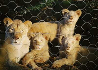 Marah's cubs see sun for first time